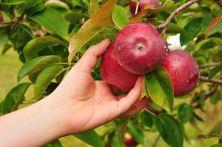 6911798_ml low hanging fruit